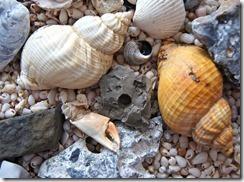 shell-cc0-pixabay-sea-92574_640